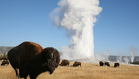 Yellowstone & Tetons Insider Tour